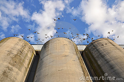 Silos and doves
