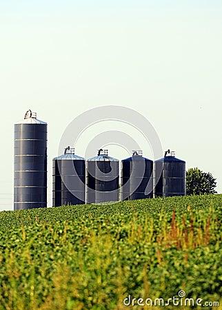 Free Silos In A Soybean Field On Farm Stock Image - 26383531