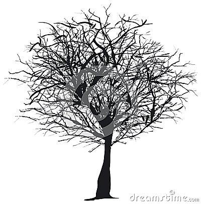 Silueta del árbol