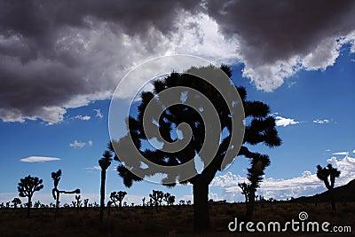 Silueta del desierto