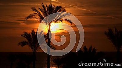 Siluetas de palmeras contra la perspectiva del sol en el amanecer almacen de video