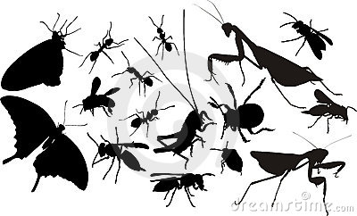 Siluette degli insetti