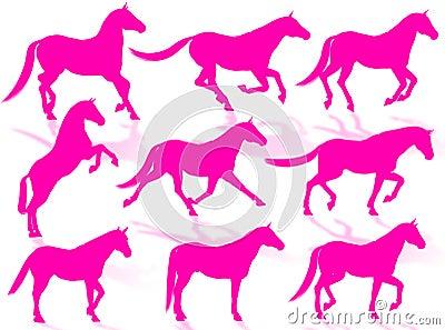 Siluette dei cavalli