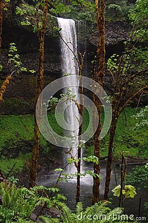 Free Silver Falls - Oregon Waterfall Stock Photos - 33727643