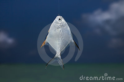 Silver fish on a hook, against blue sky and sea