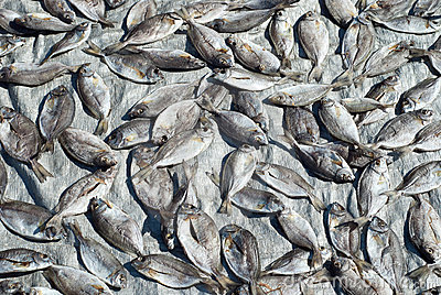 Silver fishes drying on silver background