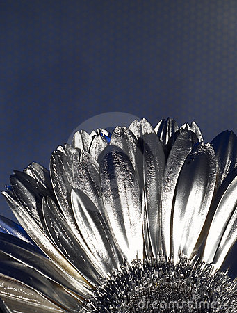 Free Silver Flover Stock Photo - 2350670