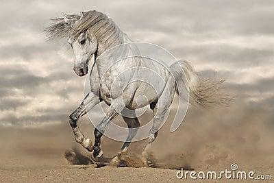 Silver gray horse in desert