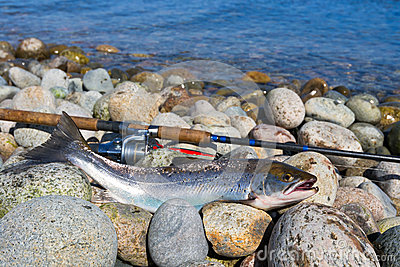Silver sea trout fishing trophy