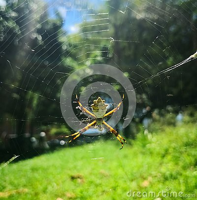 Free Silver Spider In A Sunny Day At The Park Royalty Free Stock Photo - 132694425