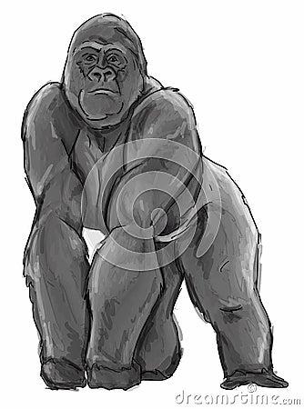 Silverback Gorilla Illustration