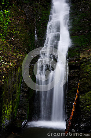 Free Silverthread Falls In The Fresh Green Of Spring Stock Image - 31146541