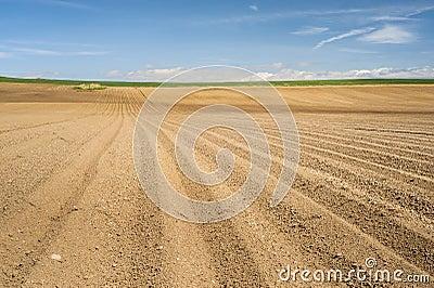 Simple brown horizon