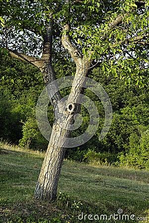 Simple Tree Image