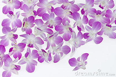 Singapore Orchid Blooms