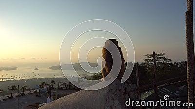 Singe observant le beau lever de soleil Il offre des vues des îles, de l'océan, du ciel et du soleil jaune banque de vidéos