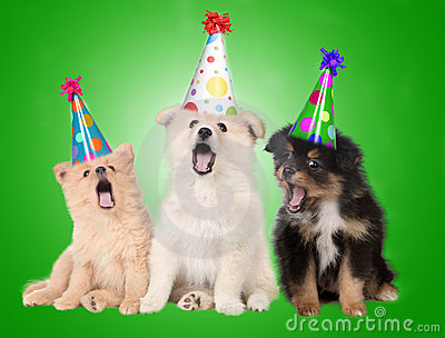 Singing Birthday Puppy Dogs