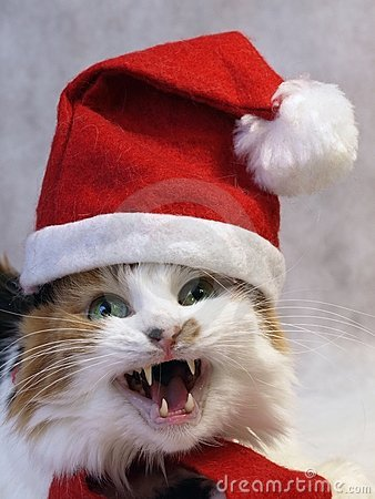 Singing christmas cat