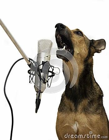 Free Singing Dog Royalty Free Stock Photos - 1480028