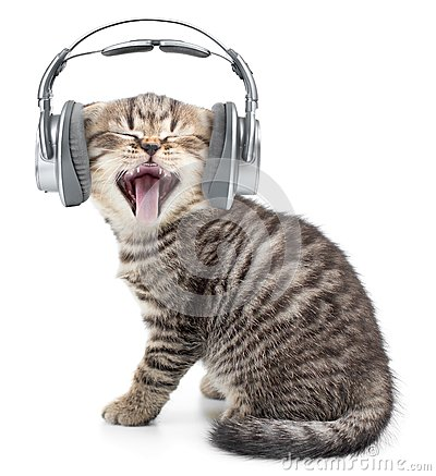 Free Singing Funny Cat Or Kitten In Headphones Stock Images - 50207084