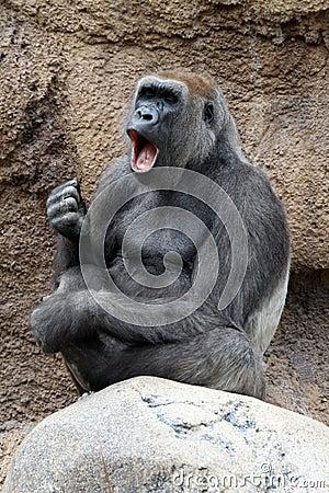 Singing Gorilla