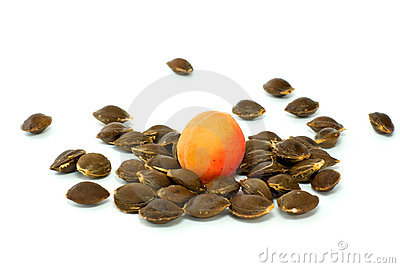 Single apricot over some kernels