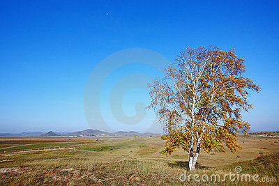 Single autumn trees
