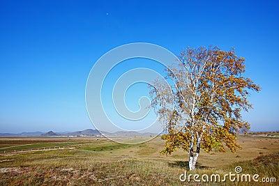 Single autumn trees