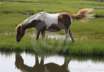 Single brown and white pony
