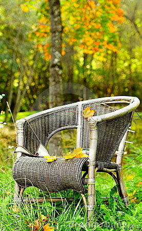 Single chair autumn background in forest