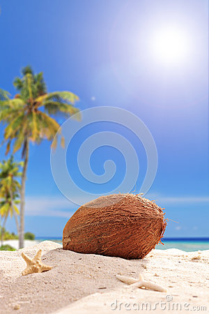 Single coconut in the sand on a tropical beach