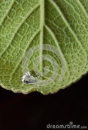 Single dew drop
