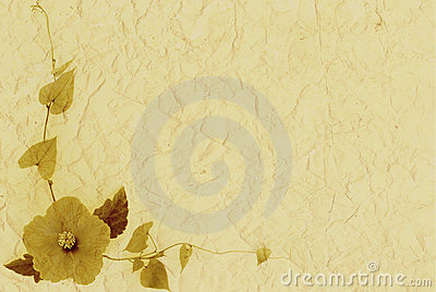 Single flower on creamy paper textured background