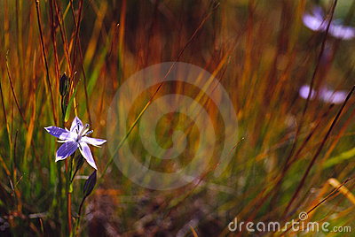 Single flower and the grass