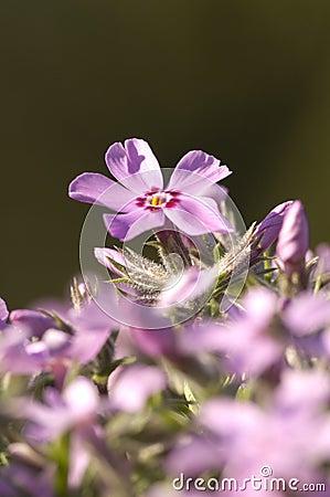 single flower rising up