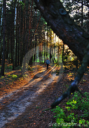 Single on a forest path