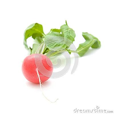 Free Single Fresh Red Radish Royalty Free Stock Image - 13719726