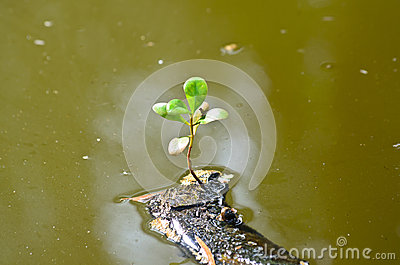 Single green leaf on dry branch in sewage