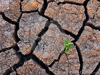 Single Green Plant and Dry Cracked Soil
