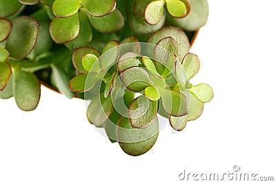Single green succulent plant