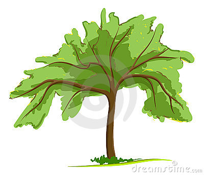 Single green tree