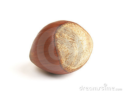 Single hazelnut