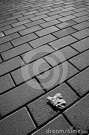 Single leaf on pavement