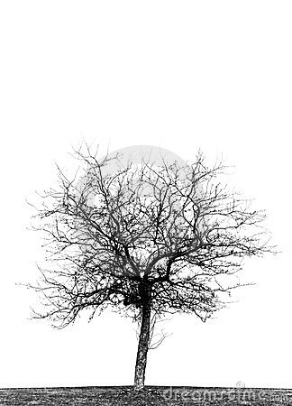 Free Single Leafless Crabapple Tree Stock Photos - 23999873