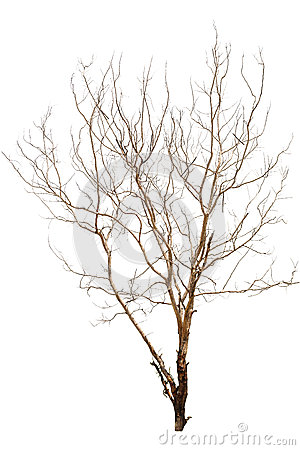 Free Single Old And Dead Tree Stock Image - 26732001