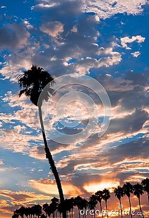 Single Palm at Sunset