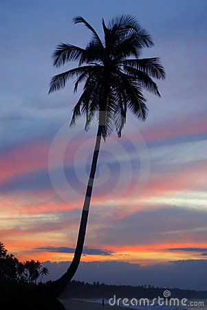 Free Single Palm Tree At Sunset On A Tropical Island Stock Image - 6640201