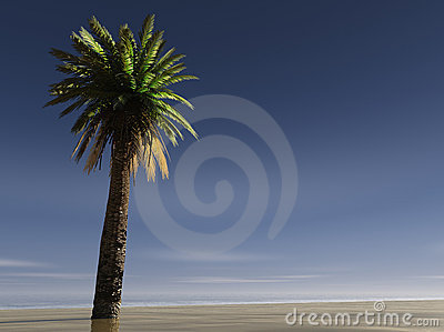 A Single palm tree on a beach