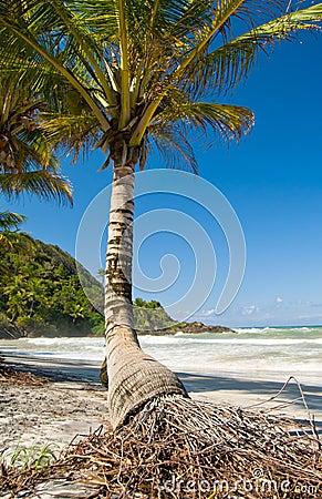 Single palm tree on a beach