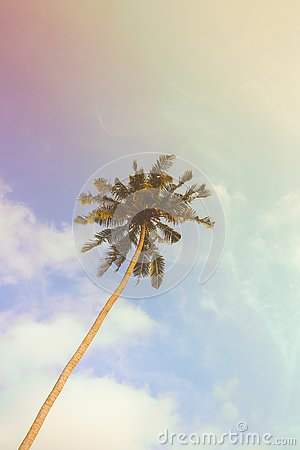 Free Single Palm Tree During Sunny Day With Vintage Filter Stock Photography - 92806362